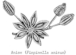 Anise 100 Pure Essential Oil 4486